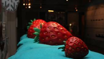 Sonderausstellung im Naturmuseum Solothurn: «Erdbeeren im Winter – ein Klimamärchen»