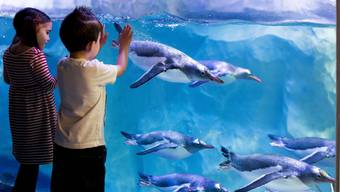 Reportage im Sea Life  und Aquatis