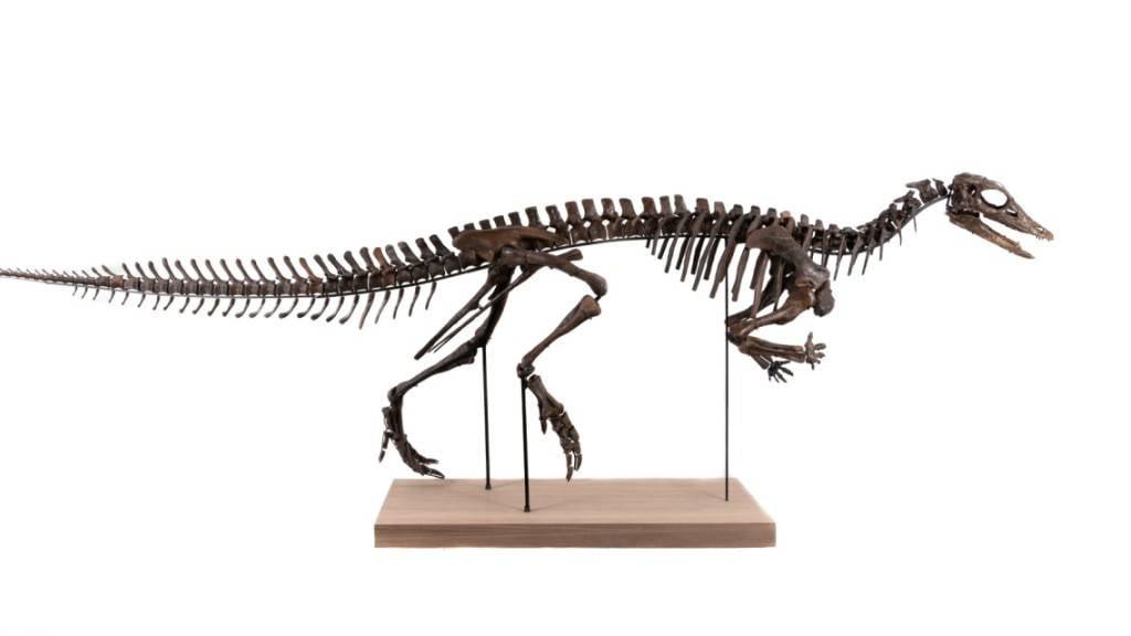 Beim versteigerten Objekt handelt es sich um ein Skelett des Thescelosaurus.