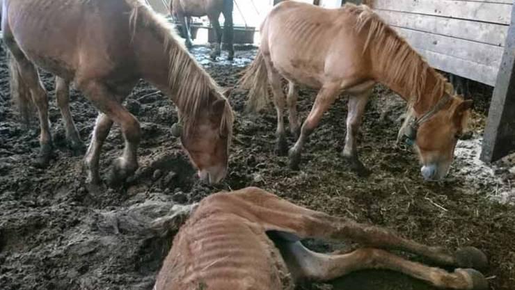 Stark abgemagerte Tiere: Der Tierquälerei-Fall von Hefenhofen gab letztes Jahr schweizweit zu reden.