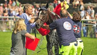 Zweiter Aarauer Frühjahrsrenntag 2018: Aarauer Pferderennen