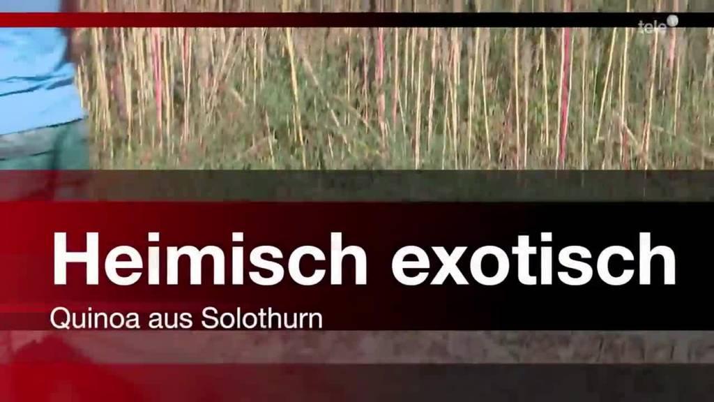 Heimisch exotisch - Quinoa aus Solothurn