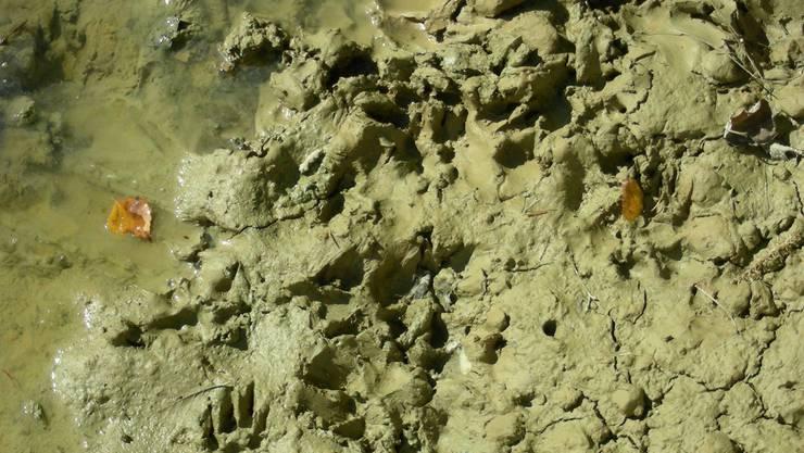 Die Spuren zeigen, dass sich auch artfremde Tiere im Weiher tummel
