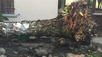 Sturm bringt Baum bei Dietiker Hundshütte zu Fall – Schäden sind keine entstanden