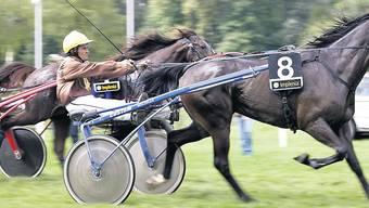 Titelverteidiger: Der Sieger vom letzten Jahr, Junior du Rib mit Fahrer Jean-Bernard Matthey (Nr.8). (Bild: André Albrecht)
