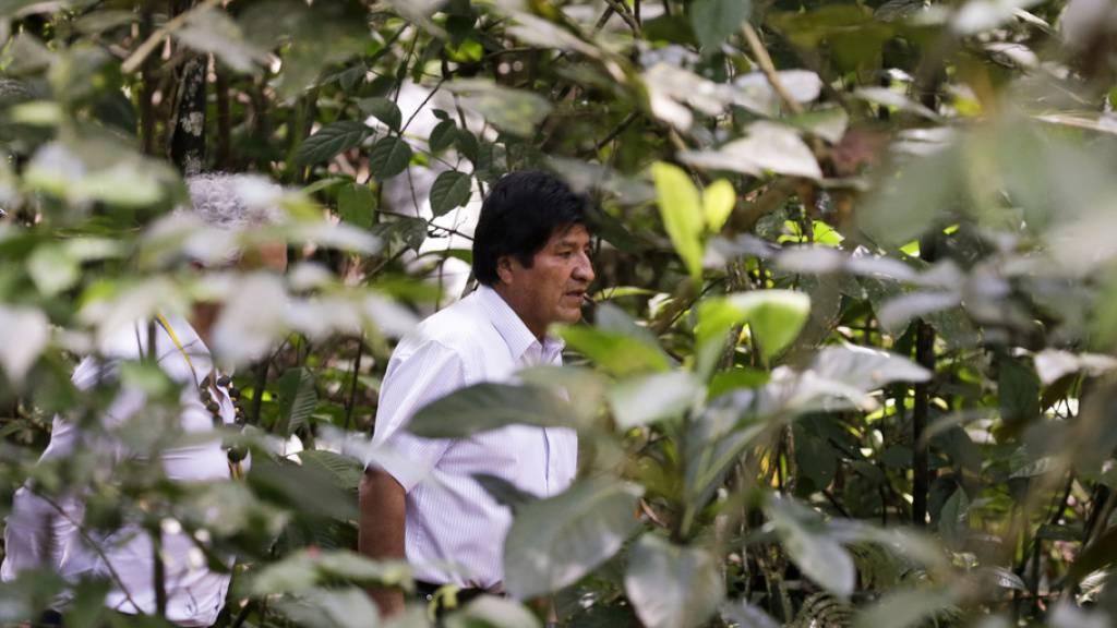 Boliviens damaliger Präsident Evo Morales letzten Herbst  im kolumbianischen Amazonas-Wald. Anlass war ein Gipfeltreffen zur Rettung des Regenwalds. Ein bisschen was hat die Diskussion genützt: In Kolumbien wurde seither etwas weniger gerodet. (Archivbild)