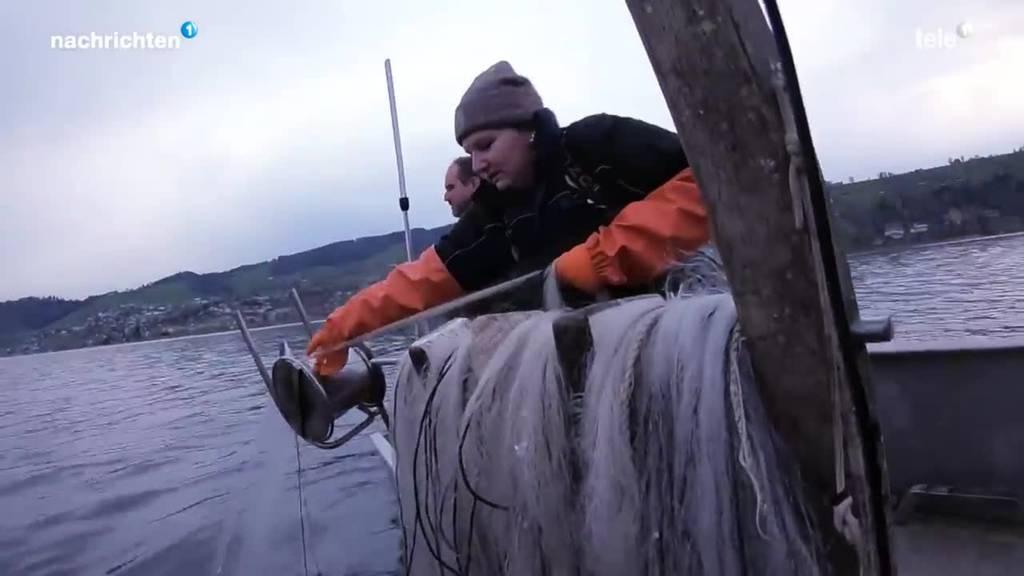 Neue Ära bei der Berufsfischerei auf dem Ägerisee