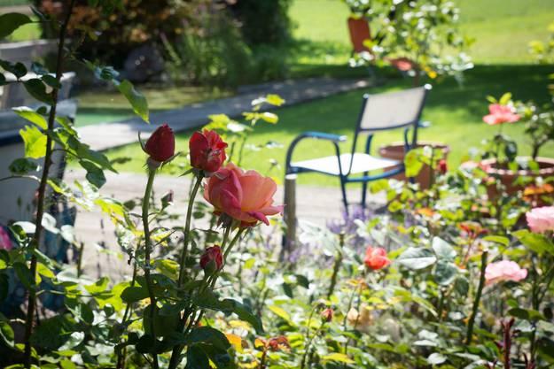 Rosen vermitteln ein gemütlches Ambiente
