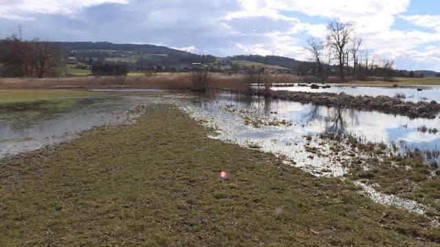 Biberproblem bei Seedorf: «Wir wohnen bald am See»
