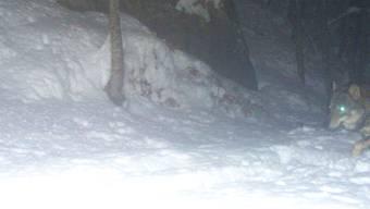 Der «Solothurner Wolf» schleicht durch den Günsberger Wald und tappt in die Fotofalle.