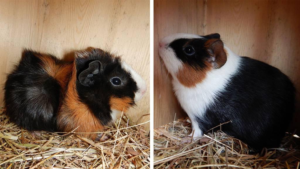 Tina und Leonie