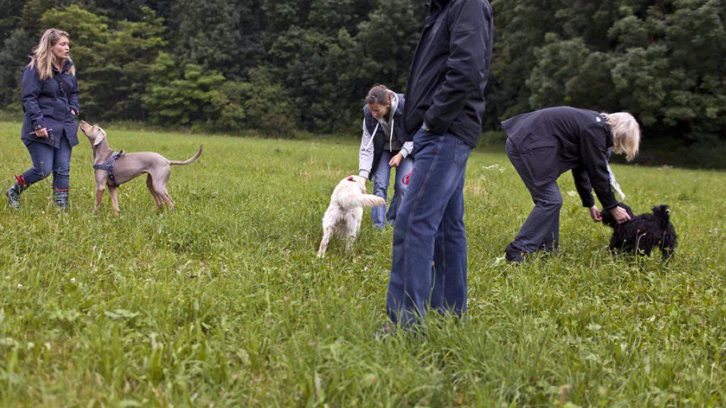 Das Parlament will die Hundekurse wieder abschaffen. (Symbolbild)