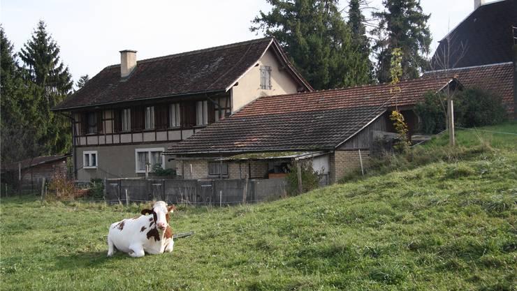 Noch geniessen Rinder den Weitblick – doch bald wird hier hinter dem Henzihof die Erschliessungsstrasse gebaut.