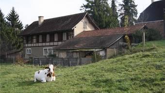Noch geniessen Rinder den Weitblick – doch bald wird hier hinter dem Henzihof die Erschliessungsstrasse gebaut. Dagegen wehrt sich die SP nun.