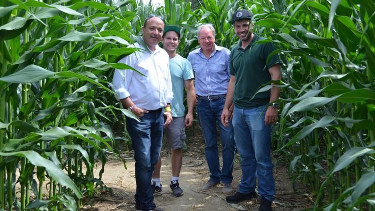 Regierungsrat Markus Dieth besucht in Wettingen die dritte Ausgabe des Maislabyrinths (v. l.):Markus Dieth, Andreas Benz, Markus Hugi und Sandro Sozzi.