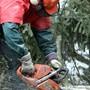 Momentan während der Holzernte, fällt viel Schadholz in den Wäldern des Zurzibiets an.