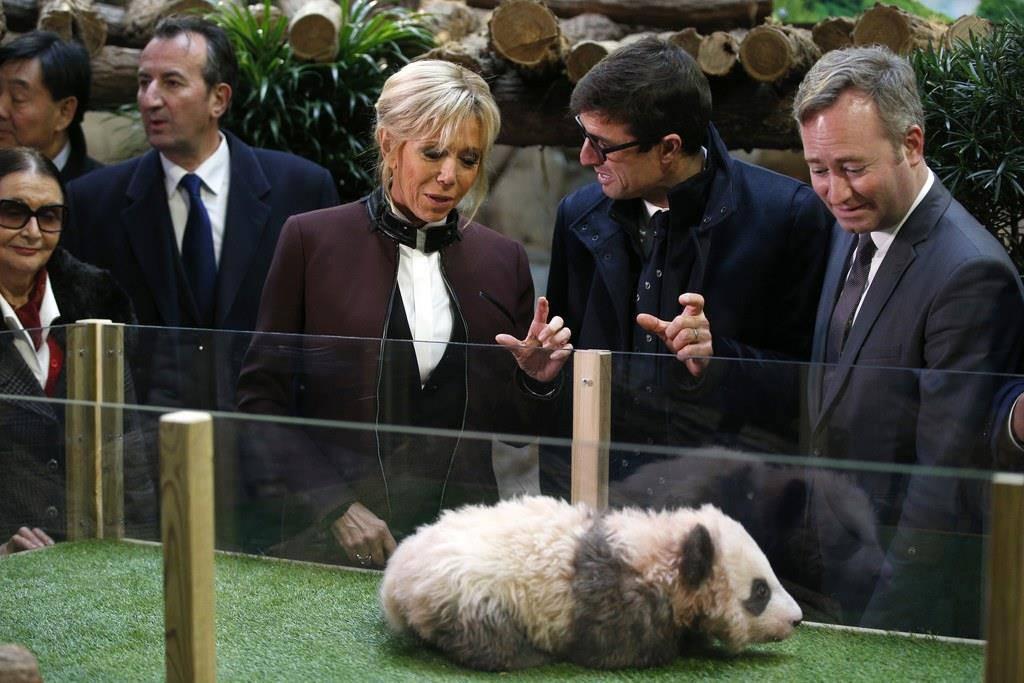Brigitte Macron erschreckt, als das Panda-Baby laut grummelt. (© Keystone)