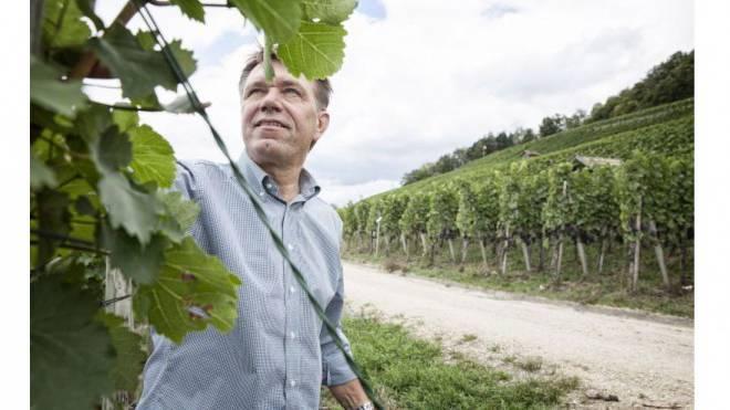 Skeptischer Blick in die Reben: Viele Winzer haben wie Andreas Meier in Würenlingen AG mit Schäden zu kämpfen, die von einem Bayer-Produkt verursacht wurden. Foto: Tanja Demarmels
