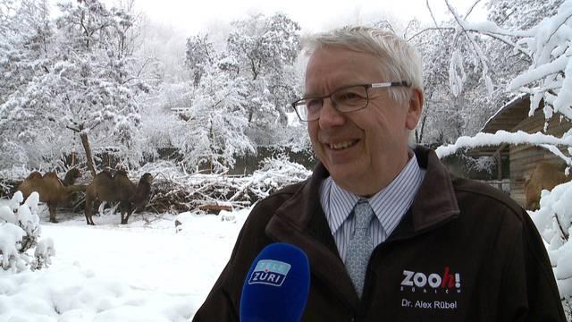 Alex Rübel gibt 2020 das Zoo-Zepter ab