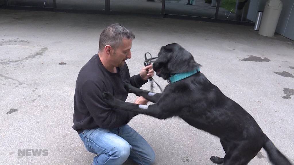 Achtung: Tierquäler verstecken präparierte Hundeköder in Heimberger Wald