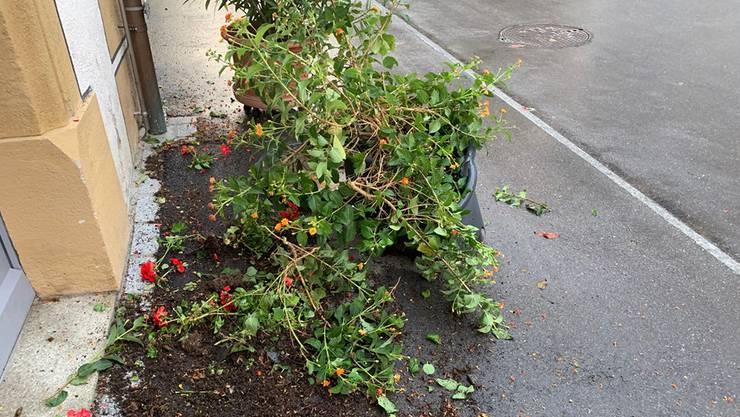 Nebst Blumen wurden in Klingnau am Wochenende auch Autos und Bankomaten beschädigt.