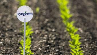 Das Basler Agrar-Unternehmen Syngenta kauft Novartis Werk ab. (Symbolbild)