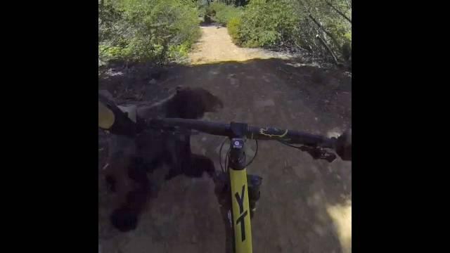 Von einem Bären aus der Bahn geworfen: Diese Aufnahmen machte Davis Souza in Kalifornien, USA.
