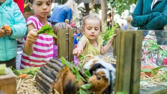 Kleintiere besuchen das Familienzentrum Karussell in Baden