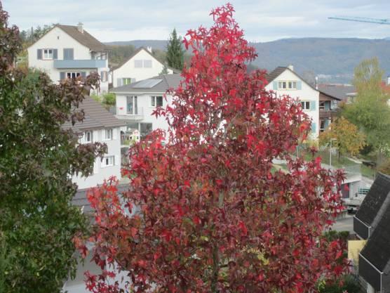 Einfach unsere Nachbarschaft im Herbst