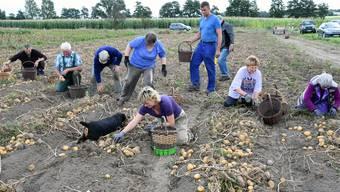 Viele Bauern sind bei der Ernte auf osteuropäische Helfer angewiesen. KEY
