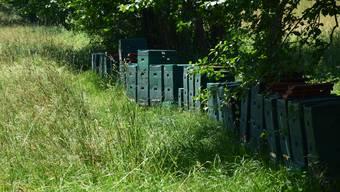 Die Magazine des Murgenthaler Imkers, aus denen über 30 Bienenvölker gestohlen wurden.