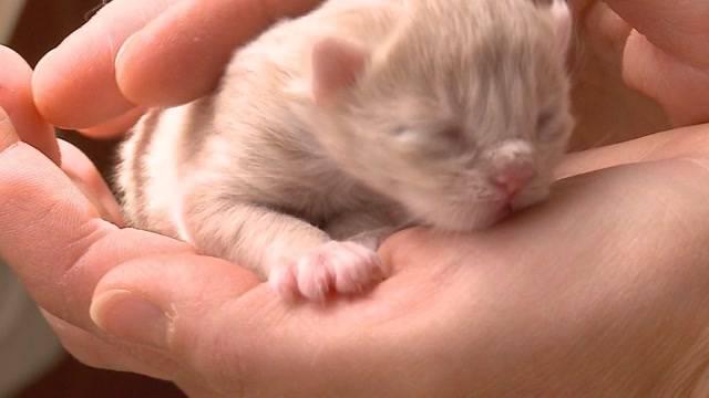 Hochschwangere Katze in Not