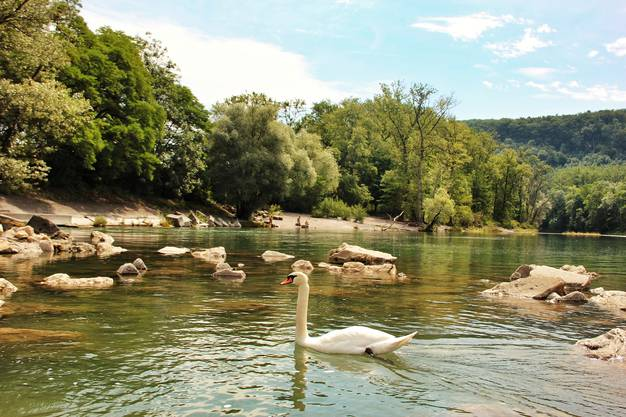 Aarau: Alter Aare Seitenarm