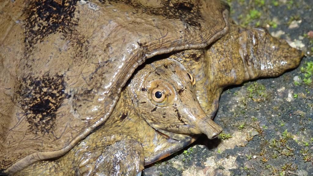 WWF-Report präsentiert 110 neu entdeckte Arten