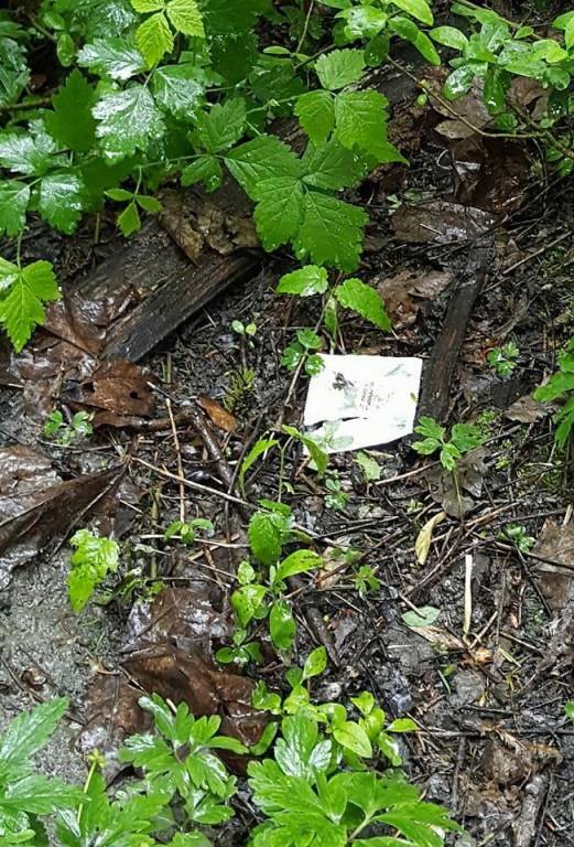So viele Kondome liegen im Kriessner Wäldli herum (© Facebook/Die Gemeinschaft Oberrheintal (CH))
