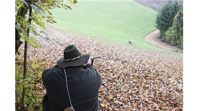 Im Winterthurer Wald sollen Jäger ab April 2017 praktische Erfahrungen sammeln können. (Symbolbild)