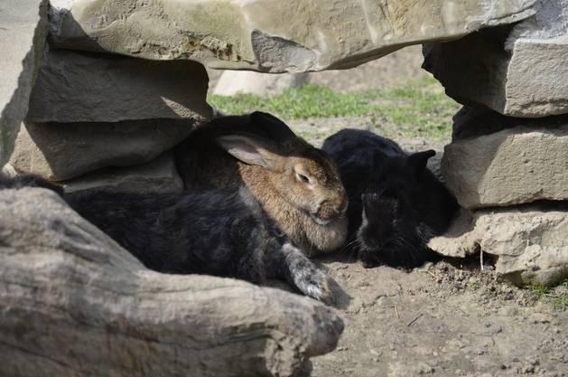 Auch Steinhäuser gibt es für die Kaninchen