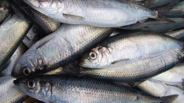 Die Fischbestände sind auch durch den Klimawandel bedroht (Symbolbild)