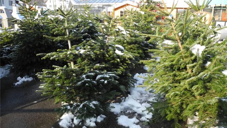 Tannenarten Weihnachtsbaum.Echte Oder Elektrische Kerzen Am Weihnachtsbaum Schweiz
