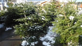 Weihnachtsbäume stehen vielerorts seit Längerem im Angebot. mf