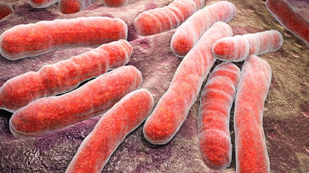 Grundlage für mögliche neue Tuberkulose-Therapie geschaffen