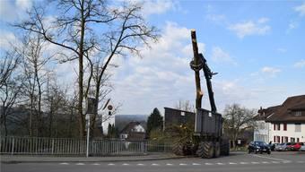 Im kleinen Waldstück beim Junenbach wurden alle 20 kranken Eschen abgeholzt.