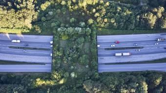 """""""Freie Bahn für Wildtiere"""". Das fordert die Organisation Pro Natura in ihrer neuen Kampagne. Bereits erfüllt ist die Forderung hier in Kirchberg BE, wo eine Wildtierbrücke besteht. (Archivbild)"""