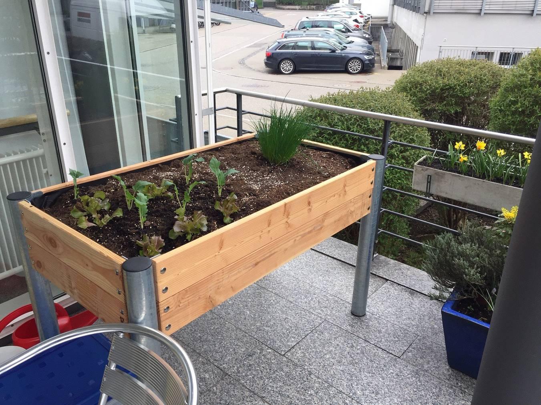 Mit sinnvollen Tätigkeiten verbringen Menschen mit Demenz-Erkrankung ihre Zeit im Lindenhof. Beispielsweise bepflanzen sie ein Hochbeet. (Bild: FM1Today/Dario Cantieni)