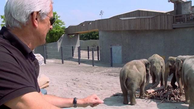 Elefanten-Aus beim Circus Knie