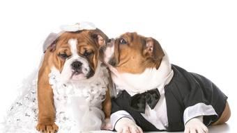 Der Fototermin ist das wichtigste Element der Hundehochzeit.