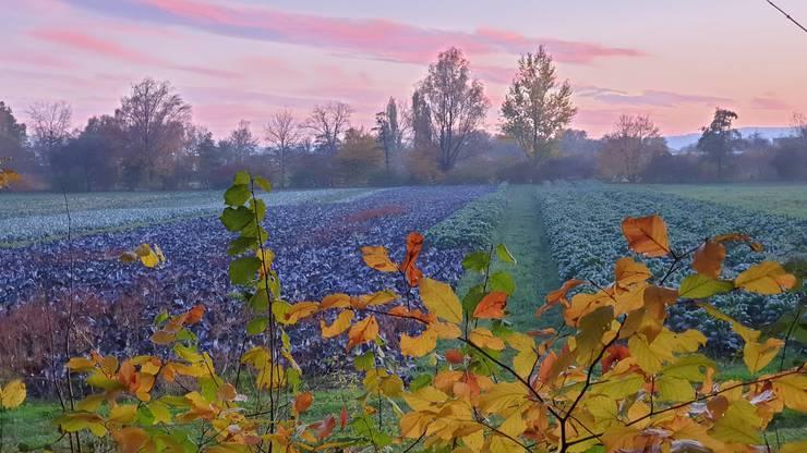 Farben von der Herbst-Farbpalte (die Bildunterschriften haben die Leserinnen und Leserinnen jeweils zu ihren eingeschickten Fotos mitgeliefert). Leserfoto: Heinz Imseng-Meyer