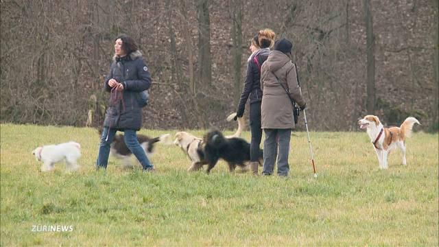 Zürich entschärft Hundegesetz
