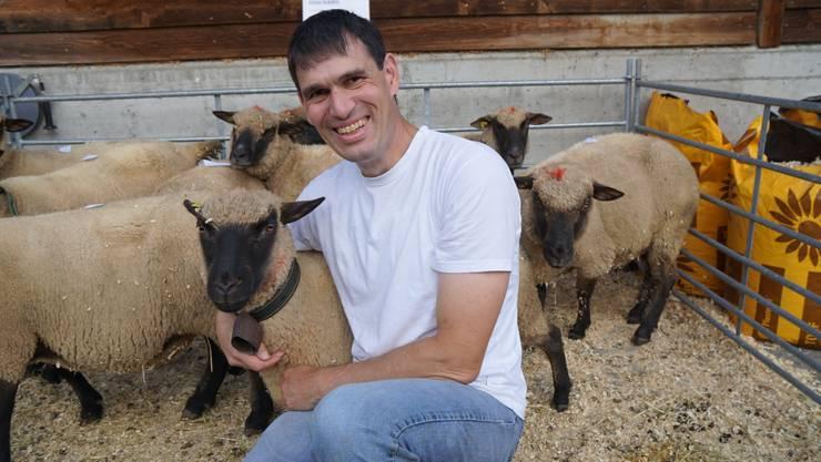 Hans Schibli züchtet Shropshire-Schafe unter anderem, weil ihm diese Tiere gefallen.
