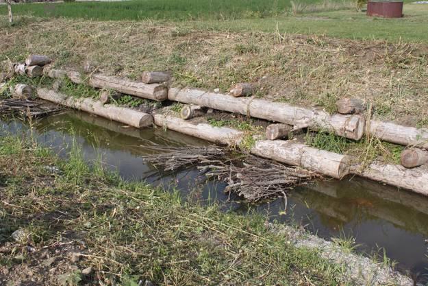 Rutenbündel wurden als Abwehr von Böschungseinbrüchen und zum Unterschlupf für Fische und Amphibien eingebaut.